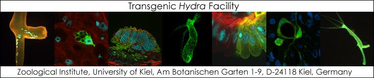 Transgenic Hydra Facility